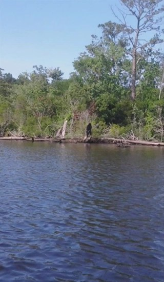 Bigfoot photo taken near intercoastal waterway in Norfolk, Virginia