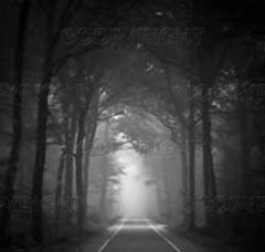 Dark road lined with trees
