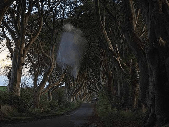 Picture of Ireland's Grey (Gray) Lady ghost captured in photo at Dark Hedges