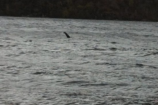 Richard Collis captures photos and video of Loch Ness Monster - November 6, 2014
