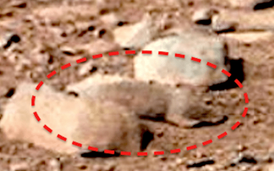 Closeup of lizard, rodent, or squirrel found in picture from NASA's Mars Curiosity rover