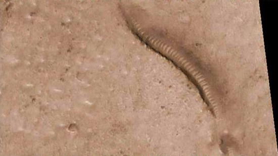 Snake fossil found on surface of Mars