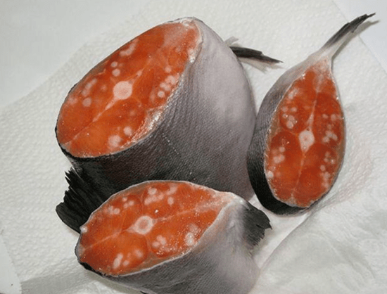 Salmon caught in Alaska filled with cancerous tumors
