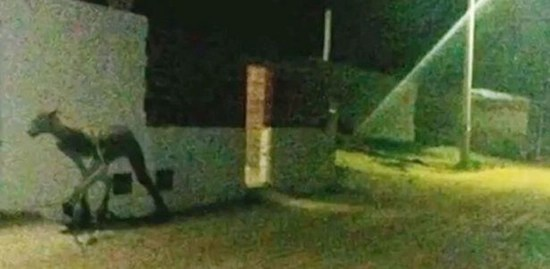Bizarre 7-foot tall creature photographed in Sante Fe, Argentina