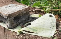 Bones from pond of Apichai Ongwisit