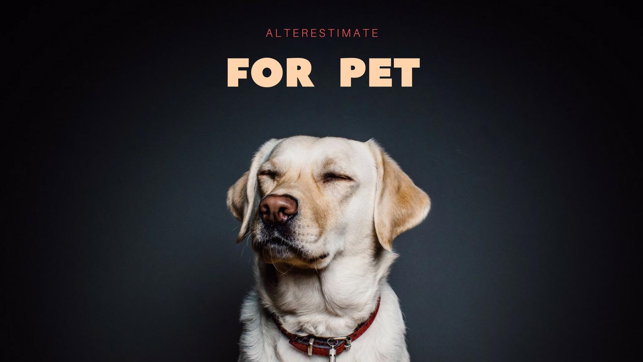 https://i0.wp.com/www.alterestimate.com/wp-content/uploads/2017/09/category-for-pet.jpg?ssl=1