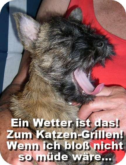 Hundecontent für die verfrühten Hundstage