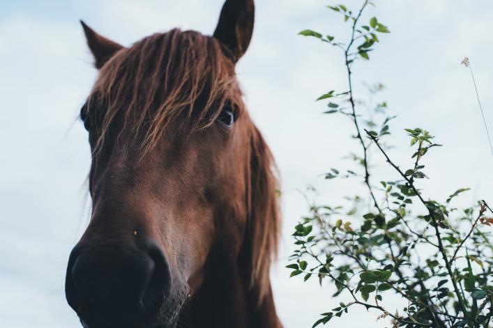 Allergy Supplement for Horses