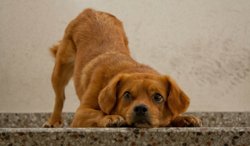 7 Natural Home Remedies To Stop Itchy Dog Skin 2