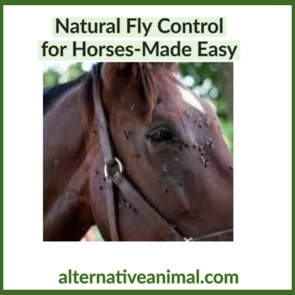 Natural fly control for horses made easy