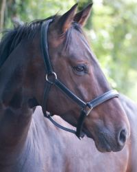 Natural Horse Supplements