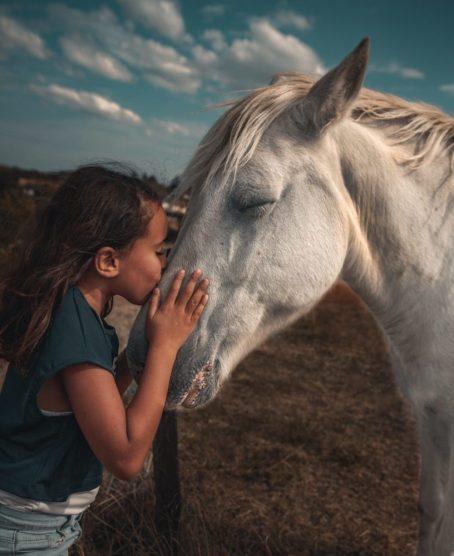 Immune Booster for Horses