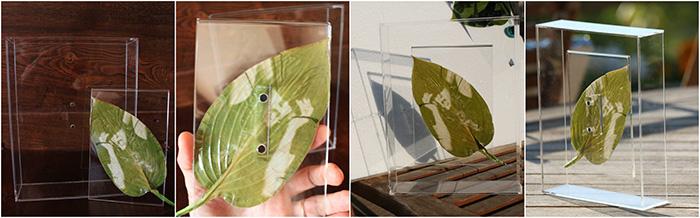 How to preserve Chlorophyll prints « Chlorophyll Process « Formulas