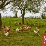 En Bretagne, l'agriculture entre deux sillons