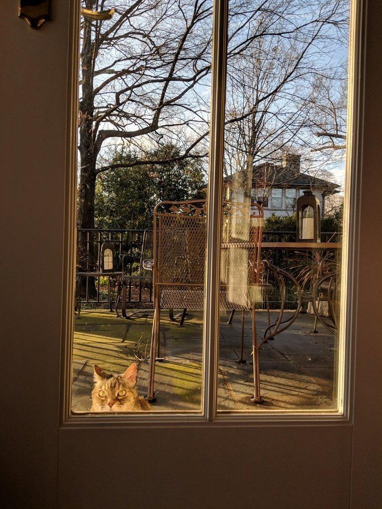 cat wanting inside