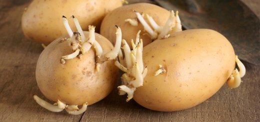 brambory-vyklicene