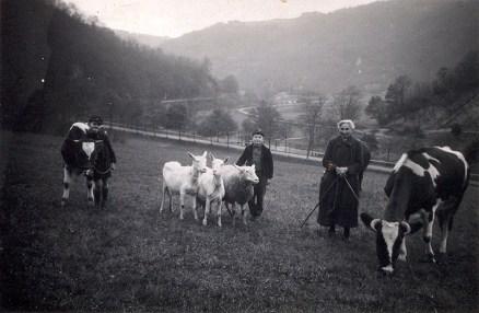 Hütegruppe mit Kühen, Ziegen und Schaf auf der Wiese unterhalb des Judenfriedhofs um 1926. In der Bildmitte schwach erkennbar die Hängebrücke.