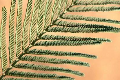 Mimosa 120219 Altiplus (9)