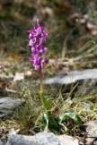 2012-05-01-Ponadieu_et_cascade_Pare-Altiplus-IMG_8695-la