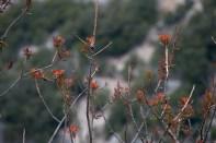2012-05-01-Ponadieu_et_cascade_Pare-Altiplus-IMG_8716-la