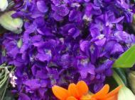 fete de la violette 009