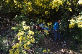 2014-03-02-Altiplus-Pegomas-Tanneron-Mimosa-Joelette-IMG_4315