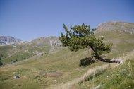 2015-07-19-Altiplus-Plan_Tendasque-IMG_0207