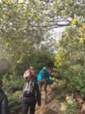 mimosas tanneron 12 02 2017 altiplus