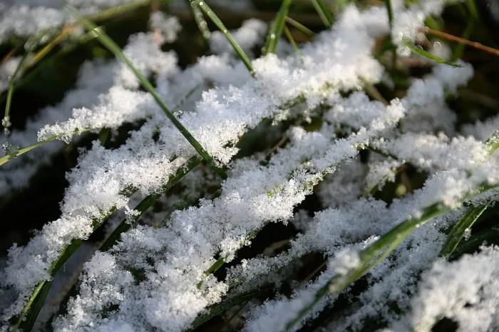 Premières neiges du Colorado, vidéo de la semaine
