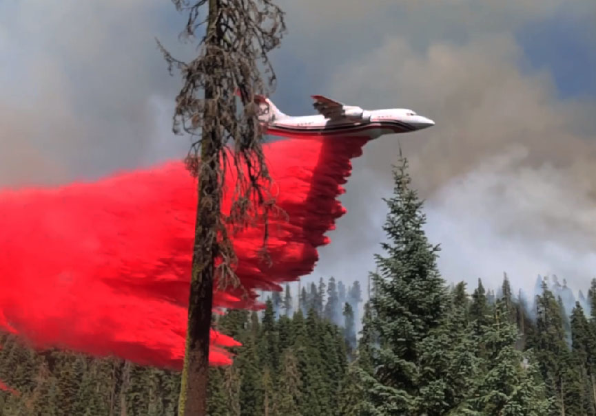 incendie séquoia