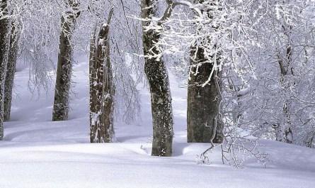 neige poudreuse japon