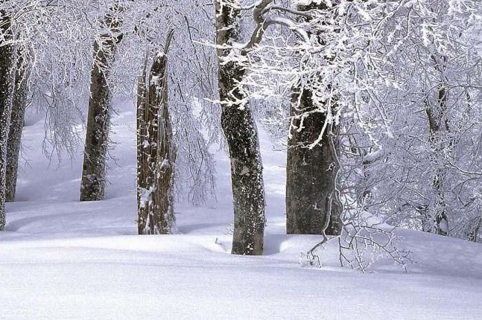 La meilleure poudreuse au monde inaccessible cet hiver !
