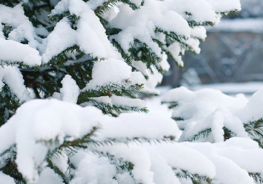 Ski Sacrifier Noel Pour Sauver Les Vacances De Fevrier