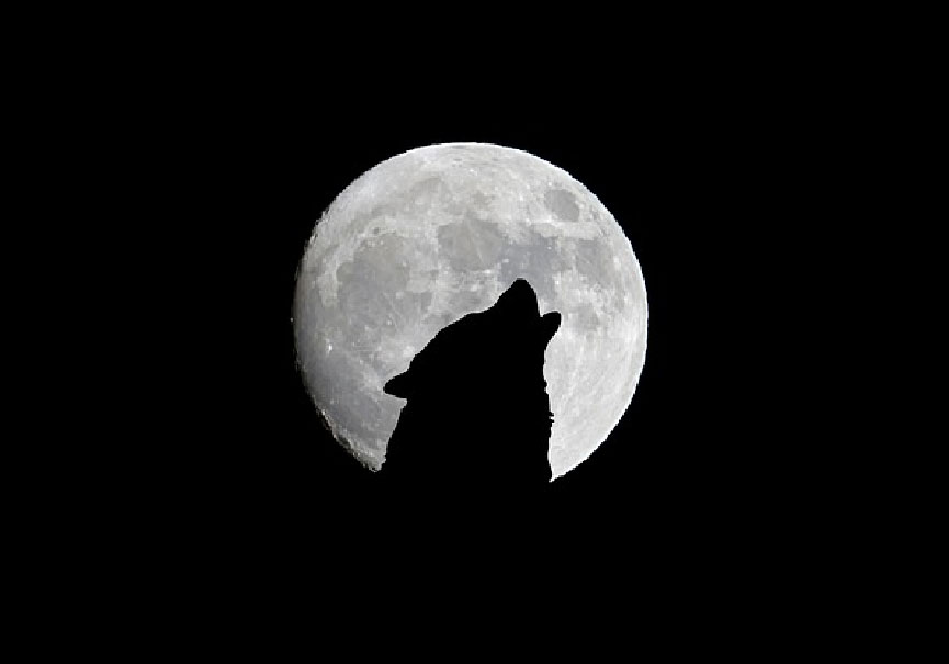 loups nuit