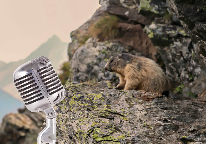 podcast marmotte
