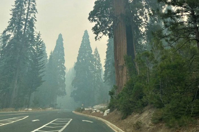 Les séquoias géants sont menacés par les flammes !