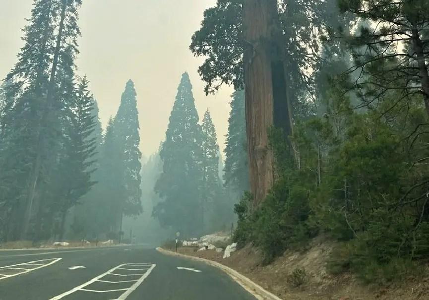 séquoia flammes