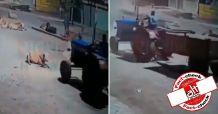 गाय पर ट्रैक्टर चढ़ाने का वीडियो वायरल, लोगों ने हिन्दू-मुस्लिम ऐंगल के साथ शेयर किया