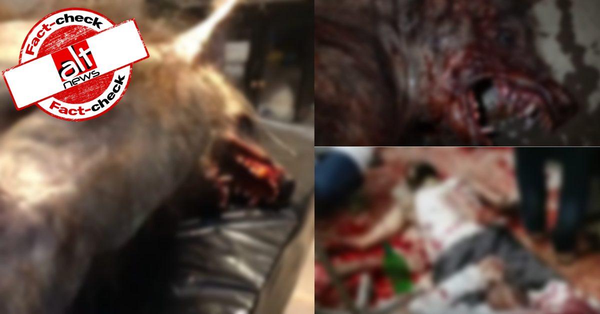 पुर्तगाल और पाकिस्तान के वीडियो साथ में शेयर कर दावा किया कि MP में इंसान की शक्ल में भेड़िया आया