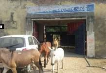 donkeys-walking-out-of-jail