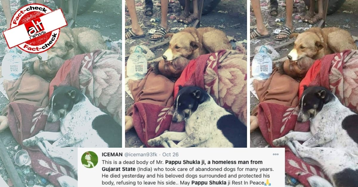 Image from Yemen viral as dead body of 'Pappu Shukla' from Gujarat surrounded by dogs