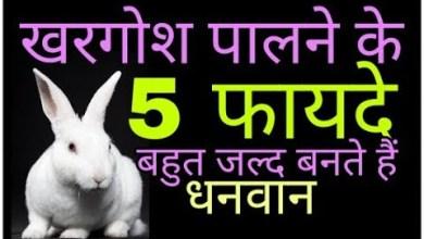 Photo of खरगोश पालने के ये फायदे जानकर आप भी दंग रह जायेंगे
