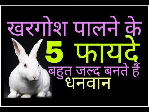 खरगोश पालने के फायदे