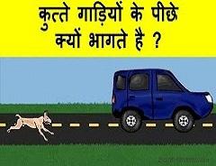 Photo of कुत्ते गाड़ी के पीछे क्यों भागते है, जानिए पूरा सच