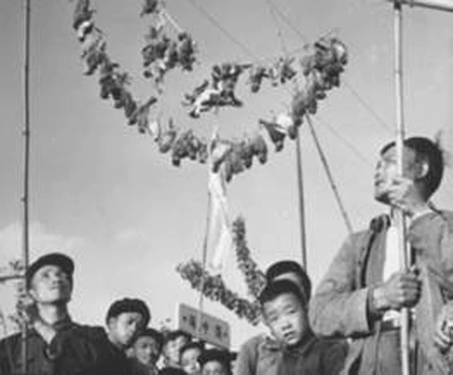 killing of sparrow in china