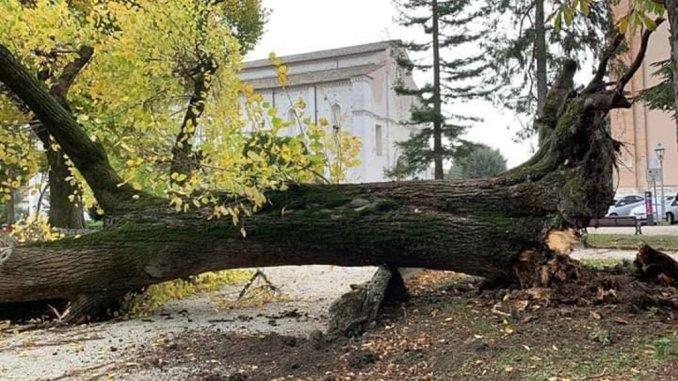 Stato di salute alberi di Piazza 40 Martiri a Gubbio, proseguono verifiche e sopralluoghi