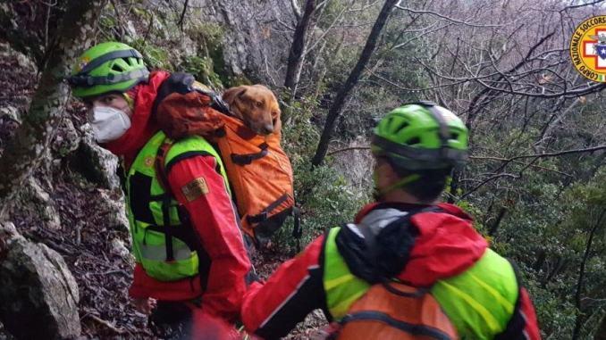 Sasu salva cane spericolato, era sul Monte Cucco a 40 metri di altezza