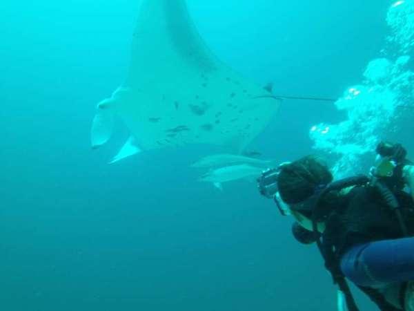 Tania Militello in immersione, mentre si avvicina ad una Manta
