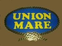 Cantiere Union Mare - Salerno