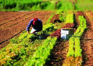 lavoratori_agricoltura